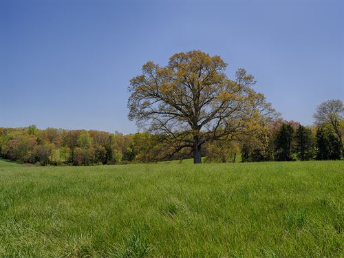 Oak Tree Farm : Louisa : Virginia