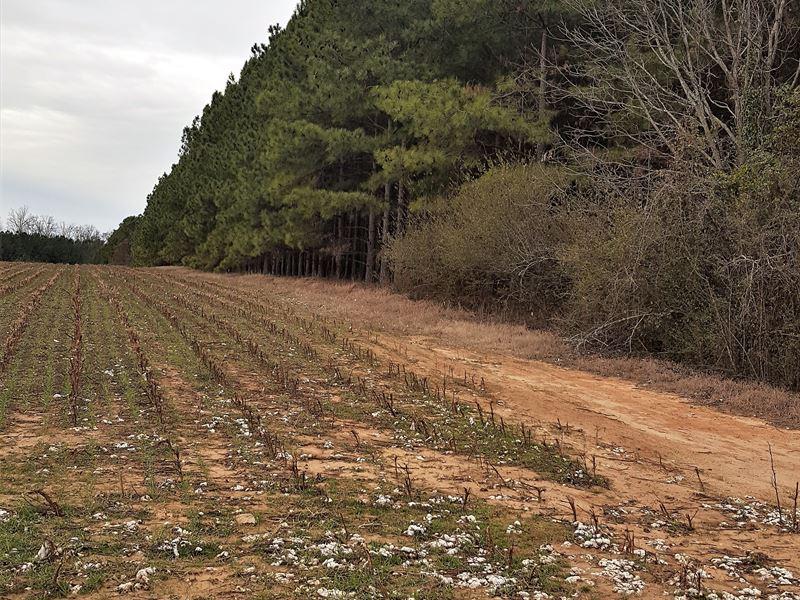 Padgett Pond Road Tract : Ridge Spring : Saluda County : South Carolina