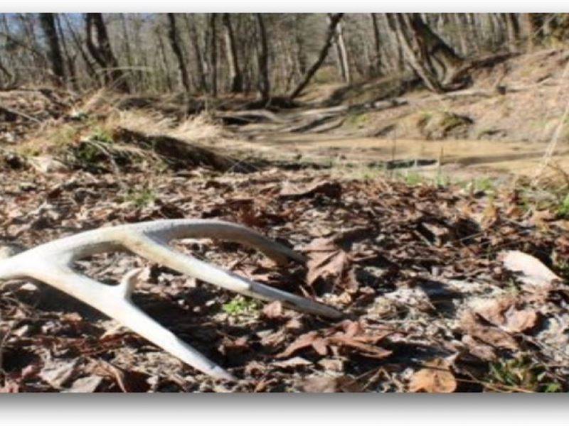 358 Acres In Leake County : Carthage : Leake County : Mississippi