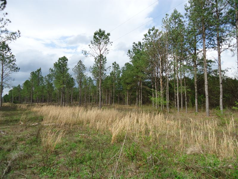 5 Acre Farms, $1000 Down : Land for Sale by Owner : Milledgeville : Hancock  County : Georgia