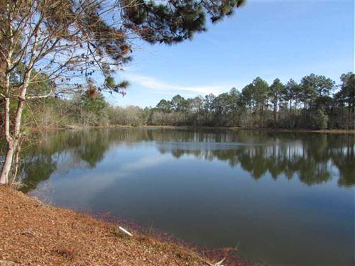 Moye Pond Property : Norman Park : Colquitt County : Georgia