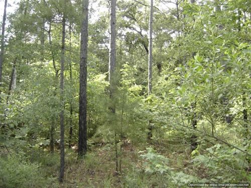 20 Ac. Recreational / Timber Land : Winona : Carroll County : Mississippi