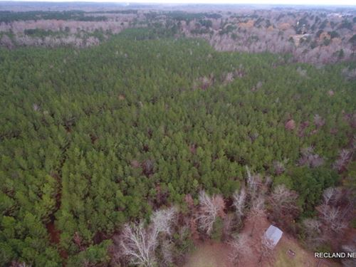 31.8 Ac Pine Plantation With Home : North Hodge : Jackson Parish : Louisiana
