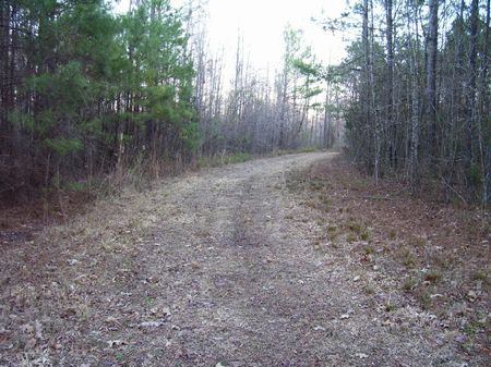 76.2 Acres W/cabin : Starkville : Oktibbeha County : Mississippi