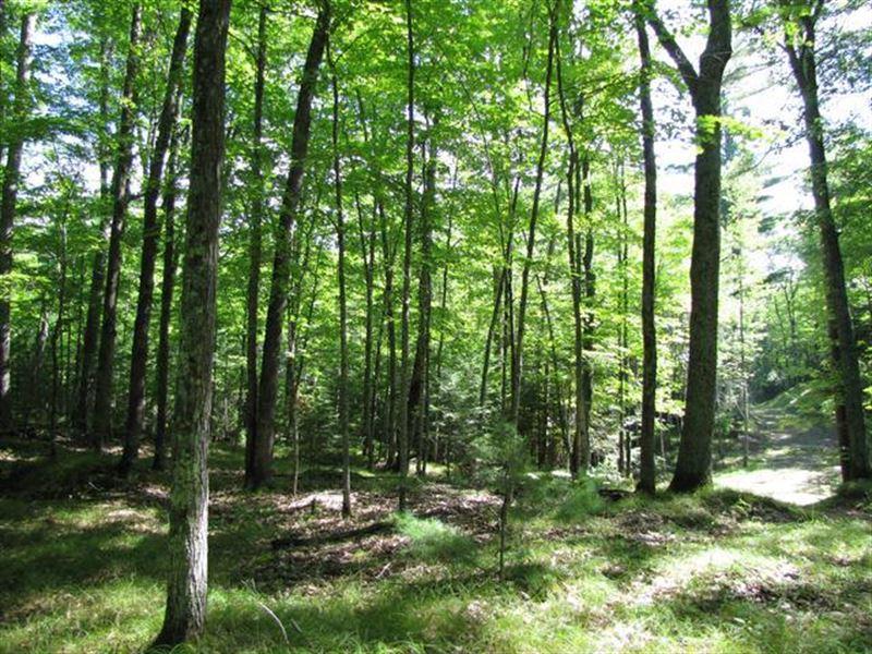 Mls 168249 - Rare Find On Bear Lake : Hazelhurst : Oneida County : Wisconsin
