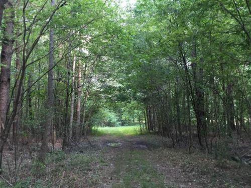 Bogue Chitto Creek Hunting Paradise : Philadelphia : Neshoba County : Mississippi
