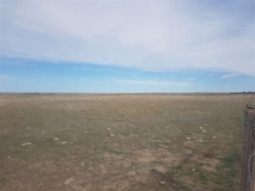 Morgan County Pasture : Brush : Morgan County : Colorado