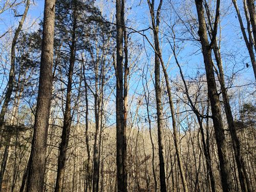 Timber And Hunting Property : Collinsville : DeKalb County : Alabama