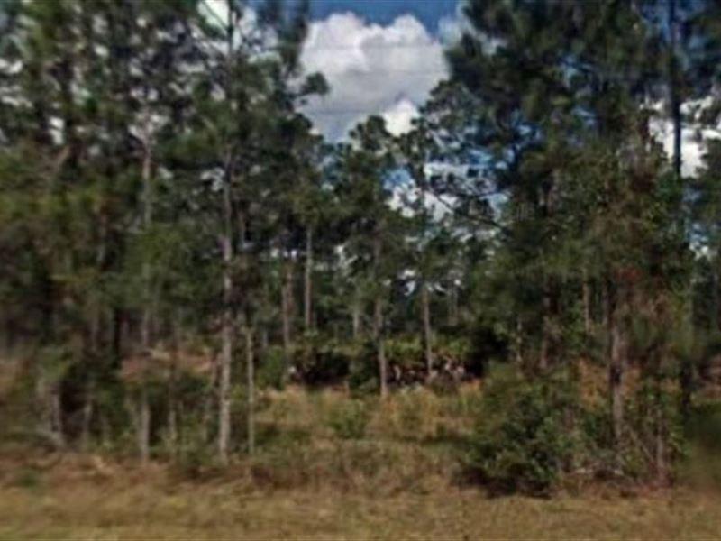 Polk County, Fl $19,000 Neg : Lake Wales : Polk County : Florida