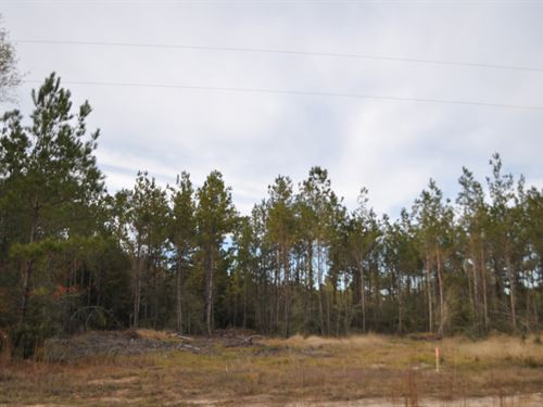 15 Ac County Rd 62 : Jasper : Walker County : Texas