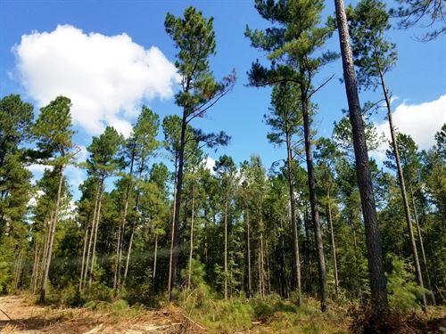Catwire 9 Tract : Neeses : Orangeburg County : South Carolina