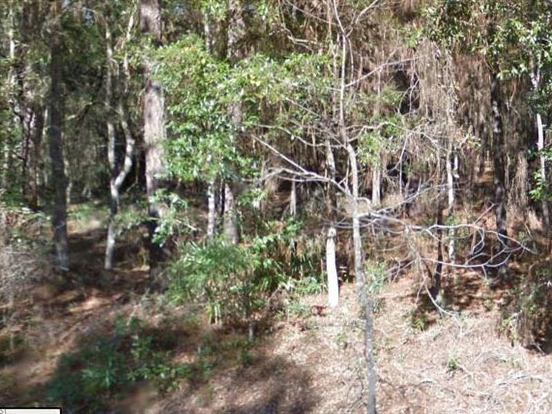Levy County, Fl $37,500 Neg : Archer : Levy County : Florida