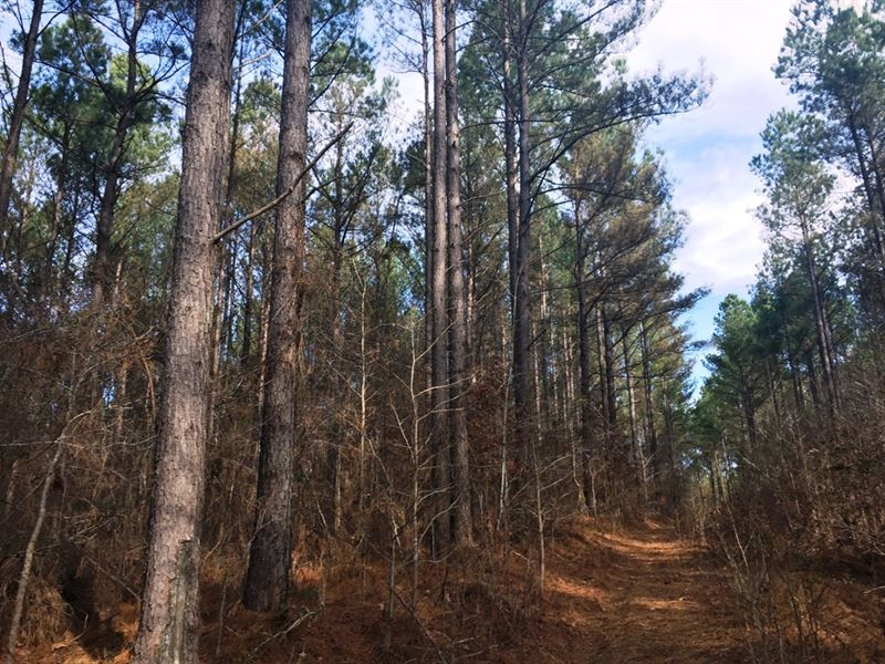 Rock Hill Tract - Tract 1526 : Lexington : Henderson County : Tennessee