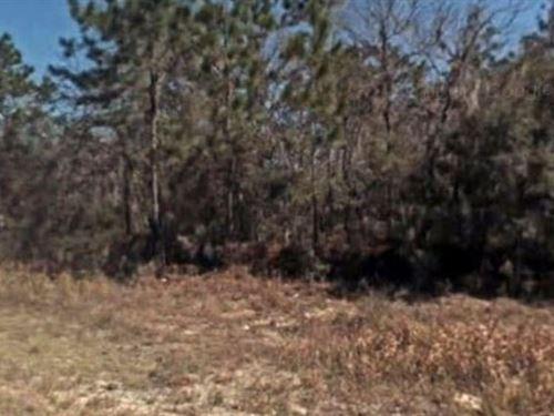 Marion County, Fl $60,000 Neg : Ocala : Marion County : Florida