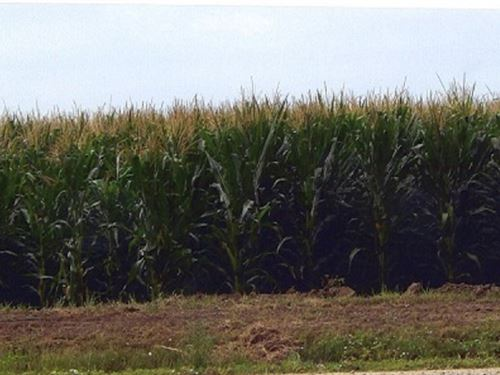 Prime Irrigated Farm : McClave : Bent County : Colorado