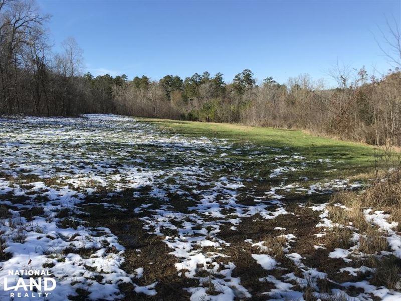 Cope Creek Millry Timber And Huntin : Millry : Washington County : Alabama
