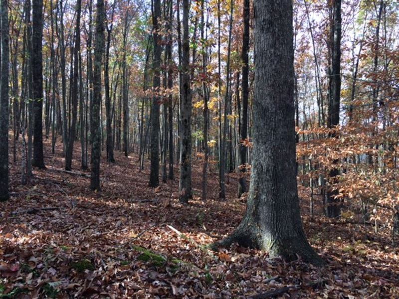 Scenic Timberland : Harriman : Roane County : Tennessee