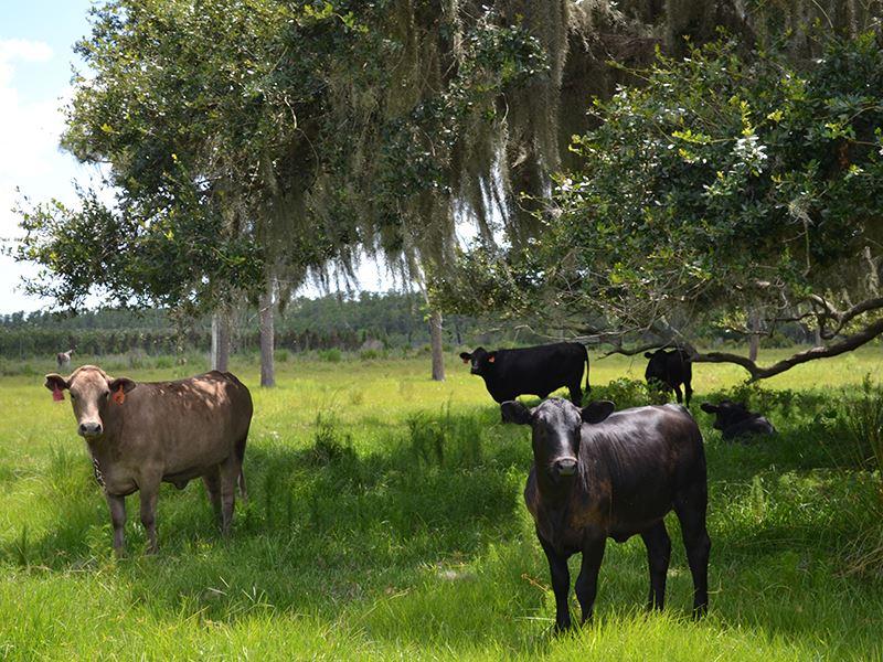 Fish Branch 46 Acres : Zolfo Springs : Hardee County : Florida