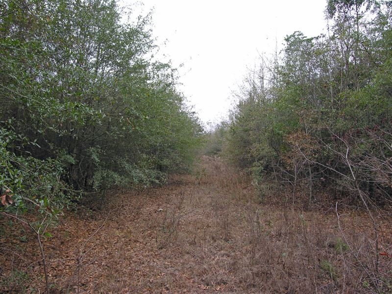 Price Reduced 60.83 Acres Wooded : Preston : Webster County : Georgia
