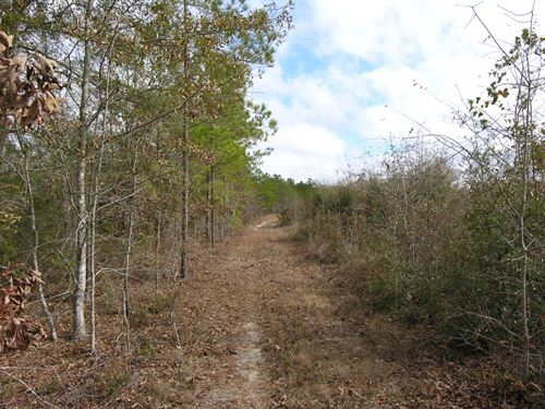 106+- Acres Wooded : Preston : Webster County : Georgia