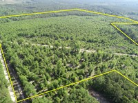 Price Reduced 106+- Acres Wooded : Preston : Webster County : Georgia