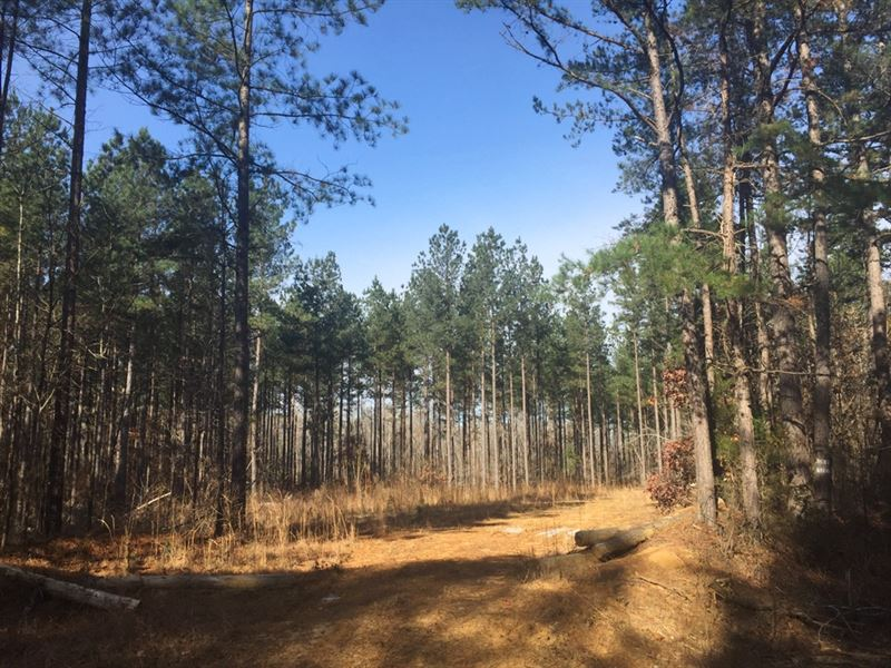 Dacus Road North : Middleton : Hardeman County : Tennessee