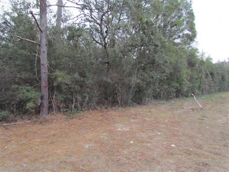 Commercial Lots 775042 : Fanning Springs : Levy County : Florida