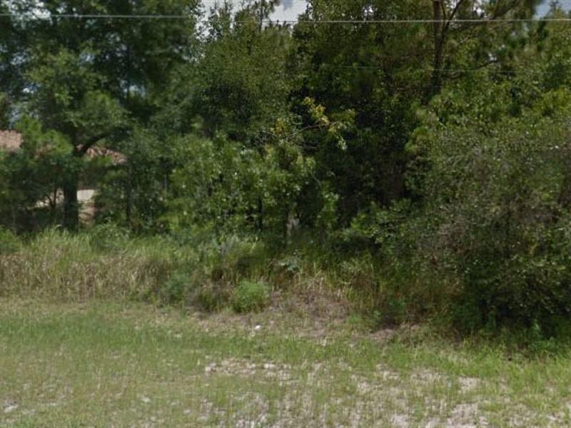 Marion County, Fl $32,000 Neg : Ocala : Marion County : Florida