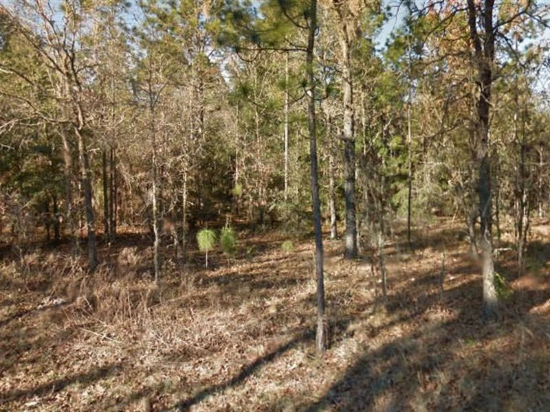 Levy County, Fl $12,000 Neg : Williston : Levy County : Florida