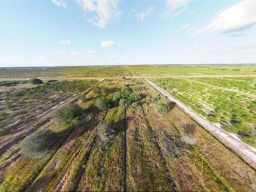 Orange Grove 10 Acres Charlotte Cou : Punta Gorda : Charlotte County : Florida