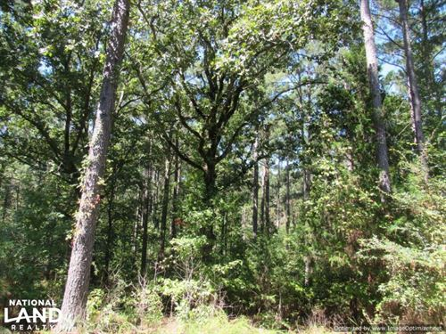 38 ac Montgomery Co Timber Tract : Eskridge : Montgomery County : Mississippi