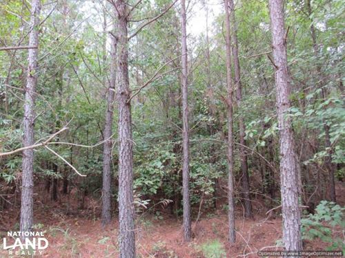 78 Acres in Montgomery County : Kilmichael : Montgomery County : Mississippi