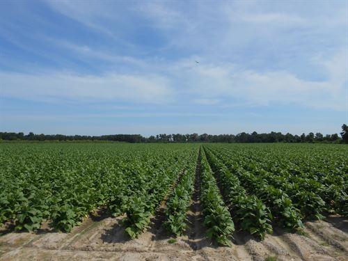Farmland, Hunting Tract, Timberland : Jamesville : Martin County : North Carolina