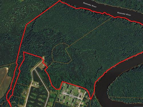 Roanoke River Timber/Hunting Tract : Jamesville : Martin County : North Carolina