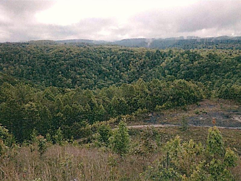 Large Hardwood Timberland Property : Madison : Boone County : West Virginia