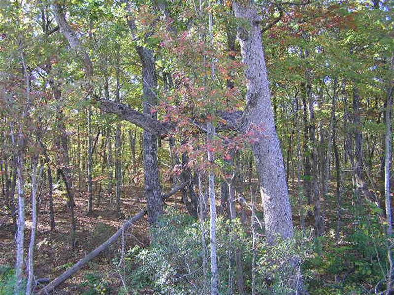 Mountain Wooded Acres : Dunlap : Sequatchie County : Tennessee