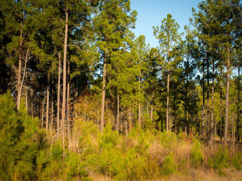 Operation Whitetail : Pineland : Sabine County : Texas