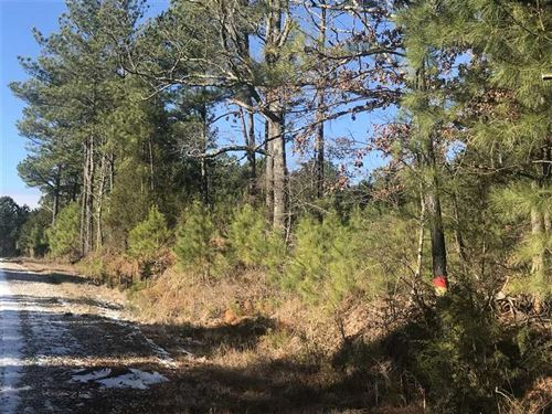 12.5 Acres on East Cox Rd Byhalia : Byhalia : Marshall County : Mississippi