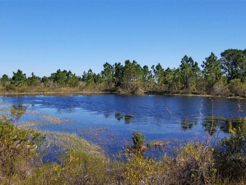Charlotte County Florida Country Li : Punta Gorda : Charlotte County : Florida