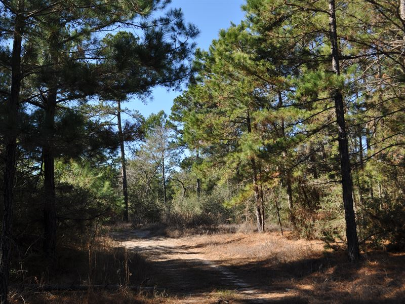 279 Acres Hopewell Forest : Huntsville : Walker County : Texas