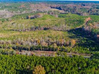 Pine Plantations And Hardwood Hills : Chester : Chester County : South Carolina