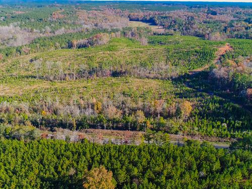 Pine Plantations And Hardwood Hills : Chester : South Carolina