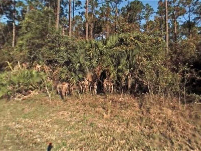 Flagler County, Fl $50,000 Neg : Palm Coast : Flagler County : Florida