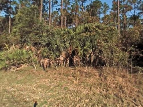 Flagler County, Fl $50,000 Neg : Palm Coast : Flagler County : Florida