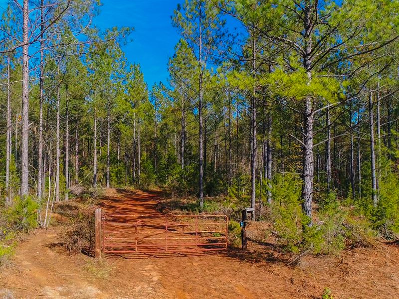160 Acres On Little Cedar Creek : Winnsboro : Fairfield County : South Carolina