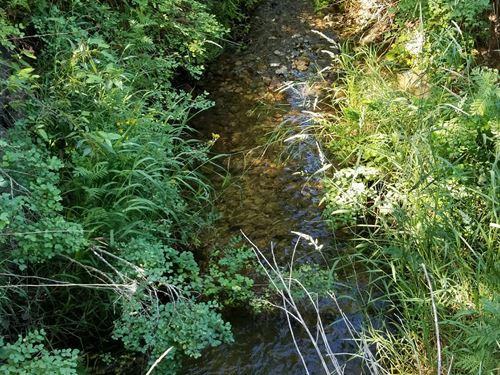 Kreiger Creek : Sandpoint : Bonner County : Idaho