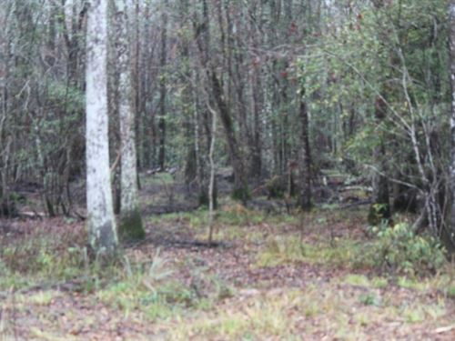 69 Acres In Jasper County, Ms : Stringer : Jasper County : Mississippi