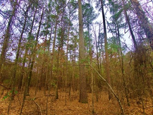 19.6 Acre Timber / Development : Hosston : Caddo Parish : Louisiana