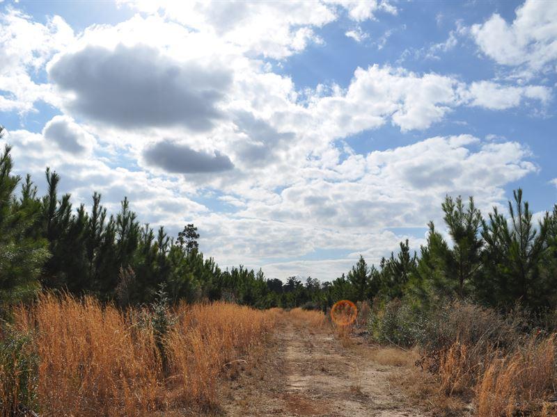 105 Acres Fm 247 : Huntsville : Walker County : Texas