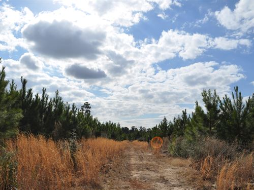 105 Acres Fm 247 : Huntsville : Walker County : Texas